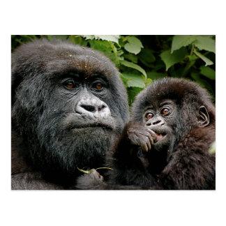 Cartão Postal Gorila do Ugandan