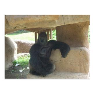 Cartão Postal Gorila mal-humorado