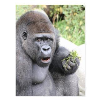 Cartão Postal Gorila surpreendido