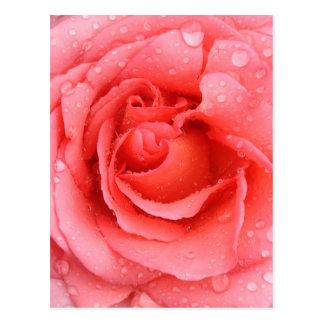 Cartão Postal Gotas cor-de-rosa românticas da água cor-de-rosa