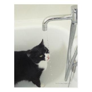 Cartão Postal Gotejamento da água potável do gato de uma
