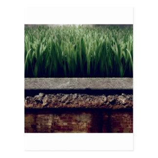 Cartão Postal Grama mais verde do jardim abstrato o outro lado