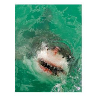 Cartão Postal Grande branco Shark1