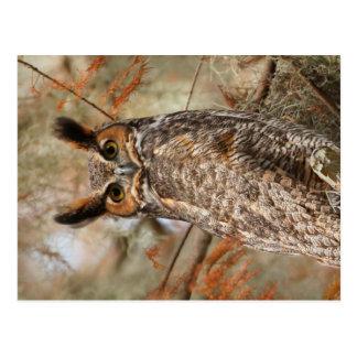 Cartão Postal Grande coruja Horned