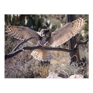 Cartão Postal Grande coruja Horned de aterragem