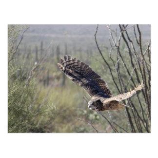 Cartão Postal Grande coruja Horned de voo