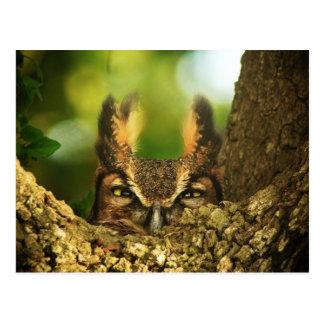 Cartão Postal Grande coruja Horned fêmea