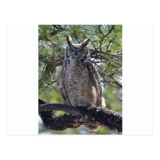 Cartão Postal Grande coruja Horned na árvore