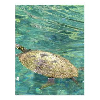 Cartão Postal grande natação da tartaruga do rio