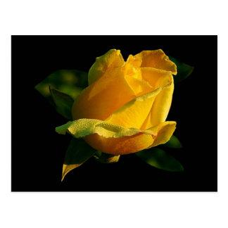 Cartão Postal Grande rosa amarelo