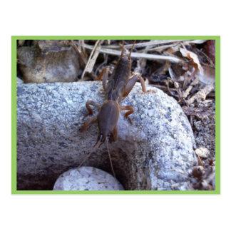 Cartão Postal Grilo de toupeira na pedra