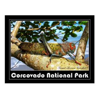 Cartão Postal Grilo gigante de Brown, parque nacional de