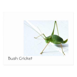 Cartão Postal Grilo Postcatrd de Bush