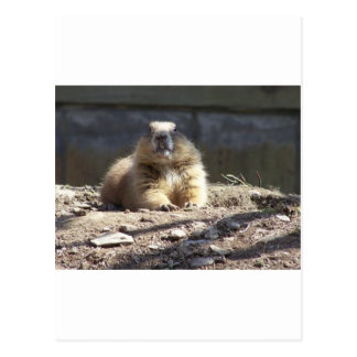 Cartão Postal Groundhog