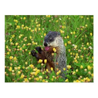 Cartão Postal Groundhog bonito com flor