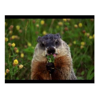 Cartão Postal Groundhog com flores