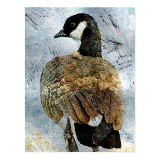 Cartão Postal Grunge do ganso de Canadá