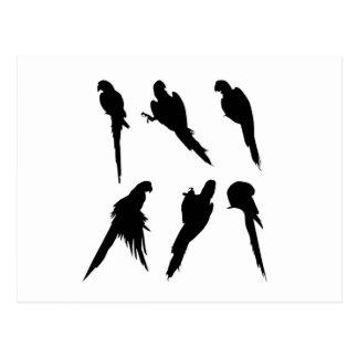 Cartão Postal Grupo da silhueta do Macaw