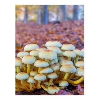 Cartão Postal Grupo de cogumelos na floresta da faia da queda