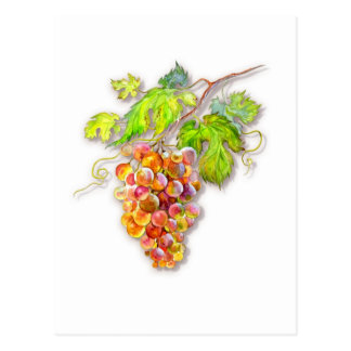 Cartão Postal Grupo de uvas