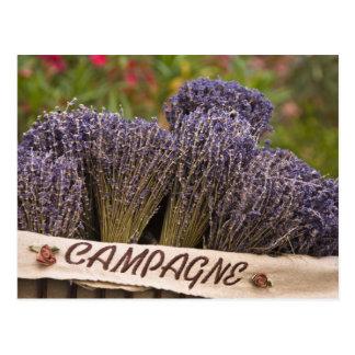 Cartão Postal Grupos da lavanda para a venda, Vence, Provence,