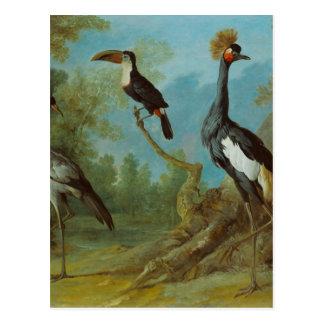 Cartão Postal Guindaste do Demoiselle, Toucan, e guindaste