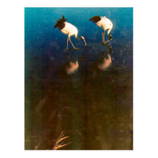 Cartão Postal Guindastes na água