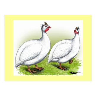 Cartão Postal Guinés:  Branco