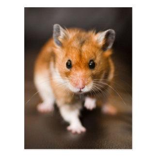 Cartão Postal Hamster