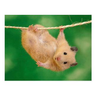 Cartão Postal Hamster bonito