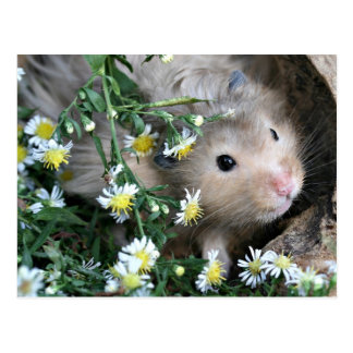Cartão Postal Hamster nas flores