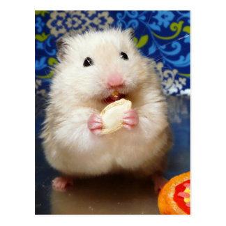 Cartão Postal Hamster sírio macio Kokolinka que come uma semente