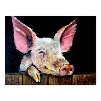 Cartão Postal Harold (porco de Steptoe)
