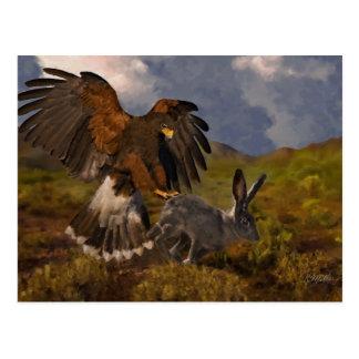 Cartão Postal Harris Hawk e Jackrabbit - acrílico