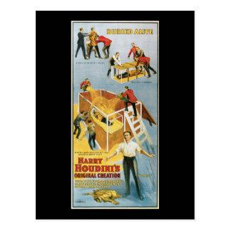 Cartão Postal Harry Houdini, poster vintage vivo enterrado, 1914