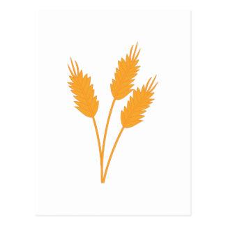 Cartão Postal Haste do trigo
