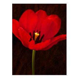 Cartão Postal Haste floral colorida da flor vermelha da tulipa