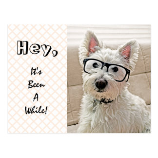 Cartão Postal Hey, tem sido por algum tempo, Westie que veste