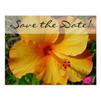 Cartão Postal Hibiscus alaranjado * salvar a data
