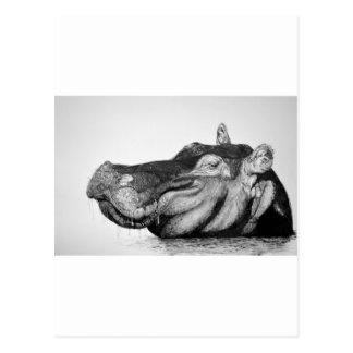 Cartão Postal Hipopótamo preguiçoso
