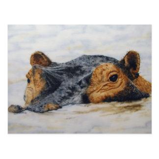 Cartão Postal hippopotamus