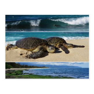Cartão Postal Honu, tartaruga de mar verde havaiana, Oahu, costa