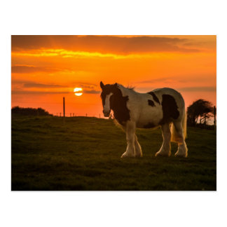 Cartão Postal Horse