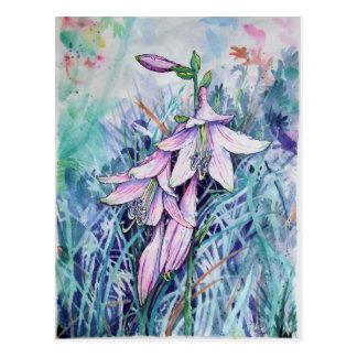Cartão Postal Hosta na flor
