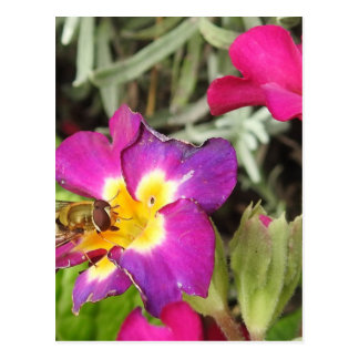 Cartão Postal hoverfly descansando
