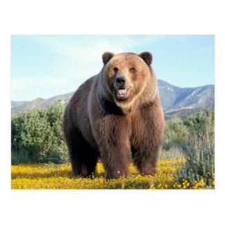 Cartão Postal Huge Brown Bear