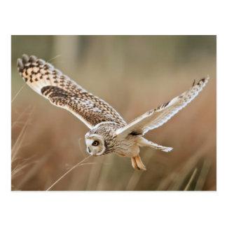 Cartão Postal Hunting Owl