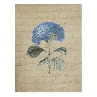 Cartão Postal Hydrangea azul do vintage com caligrafia antiga