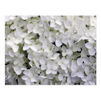 Cartão Postal Hydrangea branco