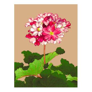 Cartão Postal Hydrangea do japonês do vintage. Rosa e verde